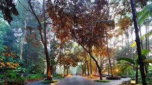 Singapore Botanic Gardens Location Singapore Botanic Gardens Unesco World Heritage Site Cnn Travel