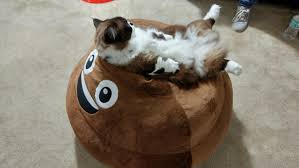 Cat Sitting Meme - my munchkin cat sitting on a poop emoji bean bag mildlyinteresting