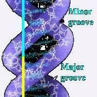 golden ratio dna spiral fig 4 4 golden ratio in hearing and balance organ scientific