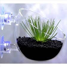 articles with glass garden planters tag glass pot plant pictures
