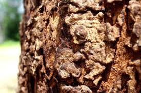 free picture nature texture bark tree bark wood pattern