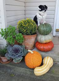 good to grow turn your garden into a place to celebrate fall