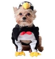Pet Halloween Costumes Dogs Amazon Penguin Dog Halloween Costume Xx Small Pet