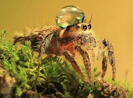 Cute Spider Meme - jumping spider water hat is just a spider with water on his head