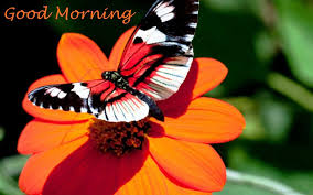 28 morning with butterfly quotes