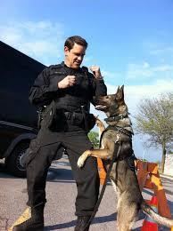 belgian shepherd ottawa 18 best canine k 9 images on pinterest ottawa police dogs and