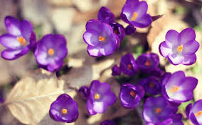 Smiley Flowers - purple smiley flowers wallpaper hd wallpapers rocks
