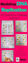 the 25 best dna lab ideas on pinterest cell cycle activity