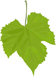 how to draw a leaf 19 ideas beautiful drawings of leaves how to