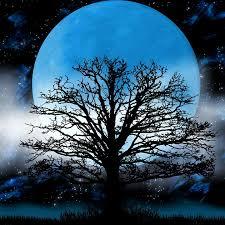 moon tree fog free image on pixabay