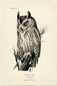 free vintage clip art screech owl old design shop blog