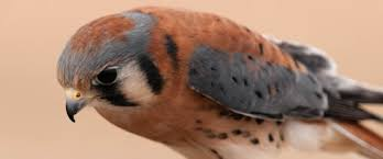 standardized 4 and 6 letter bird species u201calpha u201d codes