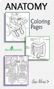Anatomy And Physiology Dictionary Free Download Free Pdf Science General Pinterest Anatomy Homeschool And