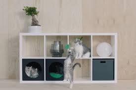 ikea is now designing furniture for cats and dogs print video