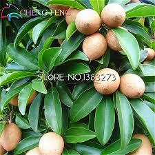 get cheap discount trees aliexpress alibaba