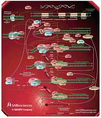 31 best genetics images on pinterest life science ap biology