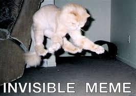 Invisible Cat Memes - th id oip hy7ug sxn4pbh4vysvoxgqhafr