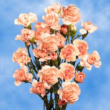 cheap flowers online bright orange spray carnation cheap flowers online global
