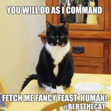 Fancy Feast Meme - you will do as i command you will do as i command bertthecat