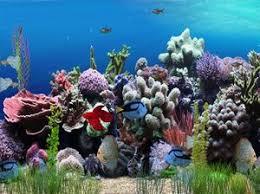 arriere plan bureau animé fond d écran animé aquarium