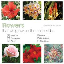 Climbing Plants For North Facing Walls - gardening on the north side in australia about the garden
