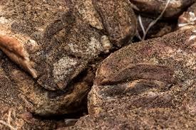 cookies schmid speck