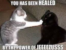 Random Cat Meme - funny random cat pictures with quotes image 57 of 71 quote lol