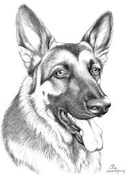 german shepherd coloring page coloring pages online