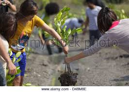 thai in mission for planting new trees for mangrove