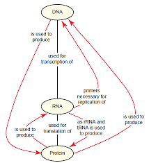 beyond the dna protein paradox answers in genesis