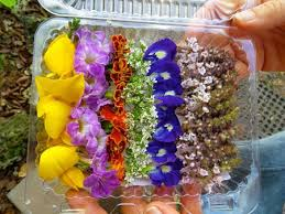 edible flowers for sale 68 best edible flowers images on edible flowers drink