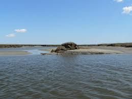 barnstable harbor ecotours u2013 tours guided by an expert naturalist