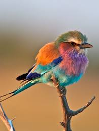 27 birds images animals beautiful birds