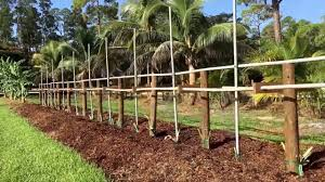 tropical fruit trees starting to produce new heavy duty dragon