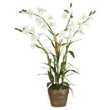 dendrobium orchids dendrobium orchid orchid flora