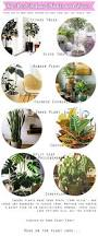 the best indoor plants and trees kinda over the fiddle leaf