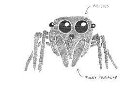 buzz hoot roar jumping spiders an evolutionary love story