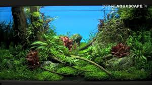 Planted Aquarium Aquascaping Aquascaping The Art Of The Planted Aquarium 2013 Xl Pt 1 Youtube