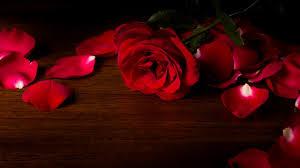 wallpaper flower red rose wallpaper red roses hd 5k flowers 6163