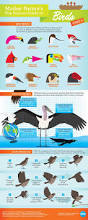 32 best bird unit images on pinterest nature study teaching