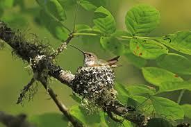how to create a hummingbird friendly yard audubon