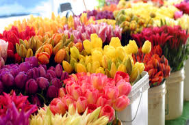 whole sale flowers learn how to care for wholesale flowers and how not to