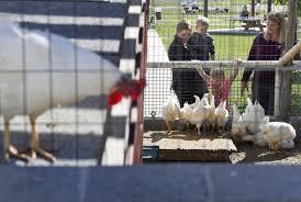 photos thanksgiving point hosts for newborn animals lehi