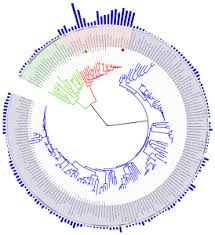 viruses and the tree of life
