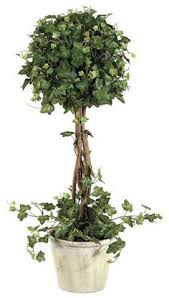 Topiaries Plants - pin by jodi on adorned with ivy pinterest topiary plants