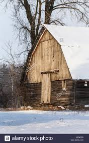 gambrell roof unpainted old and rustic barn with gambrel roof in mecosta county