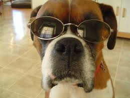 3d boxer dog t shirt 15 best images about boxer dogs on pinterest toms the boxer and