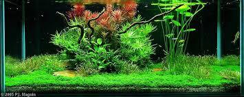 Aquascapes Com Zen Garden Style Aquascapes Aquascaping World Forum