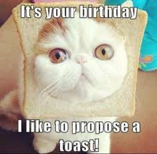 Cat Birthday Memes - funny happy birthday memes cat happy birthday quotes pinterest
