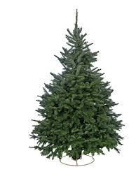 nordman fir christmas tree christmas lights decoration